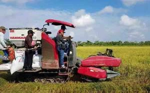 Camat Pulau Malan Pelajari Sistem Irigasi Pertanian Padi di Katingan Kuala