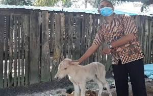 Camat Seruyan Raya Kunjungi Pengembangan Peternakan Kuda