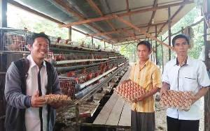 Ayam Petelur Budidaya Pemdes Ramania Mulai Menghasilkan