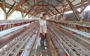 Pemdes Bararawa Kembangkan Ayam Petelur untuk Buka Wawasan Masyarakat