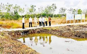 Presiden Tinjau Lokasi Pengembangan Lumbung Pangan Nasional di Kabupaten Kapuas