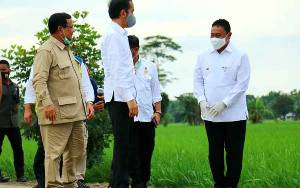 Sambil Berjalan Kaki, Bupati Edy dan Presiden Joko Widodo Tinjau Kawasan Food Estate