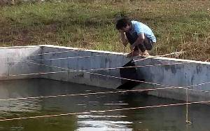 Pemkab Seruyan Terus Berupaya Kembangkan Budidaya Ikan Pipih