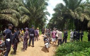 Warga Desa Penyang Minta Perusahan Hentikan Pemanenan dan Diproses Hukum