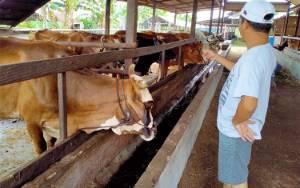 DKPP Pastikan Stok Kambing dan Sapi untuk Idul Adha Aman