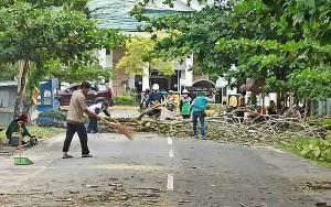 Ada Pohon Rawan Tumbang, Infokan Pada Instansi Terkait Melalui Aplikasi LAPOR!