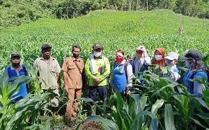 Kepala Dinas Pertanian Barito Timur Tinjau Pengembangan Luas Tanam Jagung di Sumber Garunggung