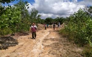 Penggarapan Lahan di Cempaga Hulu Dilaporkan Lagi Terkait Perambahan Hutan