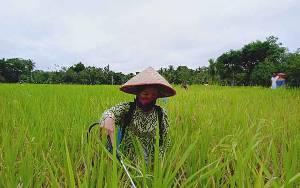 Dinas Pertanian Harapkan Perda Perlindungan Lahan Pertanian Pangan Berkelanjutan Segera Dibahas