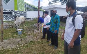 Masjid Raya Darussalam Potong Sapi Kurban Dari H Abdul Rasyid AS Besok Pagi