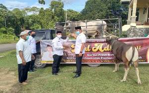 Pemkab Lamandau Terima 8 Sapi Kurban dari Gubernur Kalteng