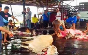 Daging Sapi Kurban Bantuan H Abdul Rasyid AS di Pulang Pisau Dibagikan untuk Ratusan Penerima
