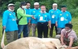 Sapi Kurban dari H Abdul Rasyid AS untuk Masjid Al-Gufron Kasongan Dipotong