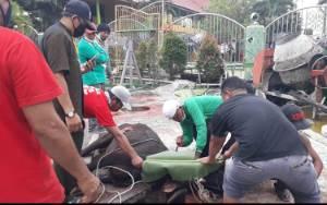 Video Pemotongan Sapi Kurban dari H Abdul Rasyid AS di Masjid Besar Sirajul Muhtadin Kelurahan Baru