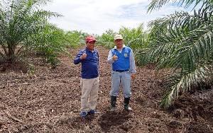 Kadis Pertanian Barito Timur Harapkan Ada Asosiasi Petani Singkong