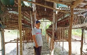 Budidaya Ayam Petelur di Desa Patung Hadapi Kendala