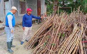 Mantan Sekda Barito Timur Bertani Singkong untuk Buka Lapangan Kerja di Desa