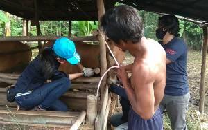 Dinas Pertanian Kapuas Imbau Peternak Jaga Kesehatan Sapi Dengan Cara Ini....