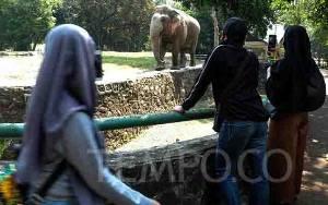 Hari Gajah Sedunia, Pemerhati Gajah Kecam Perburuan Satwa Liar