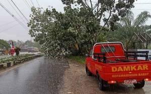 Hujan Disertai Angin Kencang, Pohon di Jalan Natai Arahan Tumbang