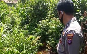 Mayat Pria di Samuda Diduga Korban Kecelakaan Tunggal