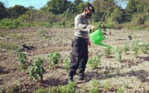 Polsek Basarang Rawat Tanaman Sayur, Dukung Ketahanan Pangan