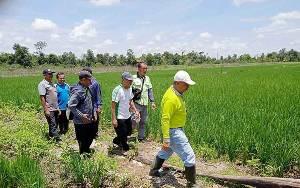 Dinas Pertanian Akan Bantu Alsintan Petani di Muara Plantau