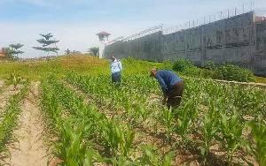 Rutan Tamiang Layang Latih Warga Binaan Berkebun