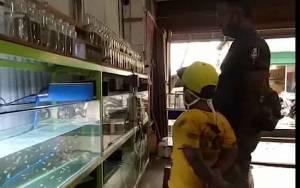 Omset Penjualan Ikan Hias Meningkat Selama Pandemi