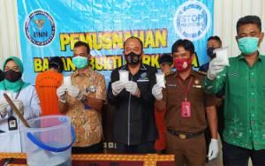 BNN Kalteng Musnahkan Sabu 500 Gram Diungkap dari Tiga Jaringan Ini