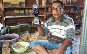 Pernah Gagal, Pedagang Ikan Cupang ini Kini Beromzet Rp 5 Juta per Bulan