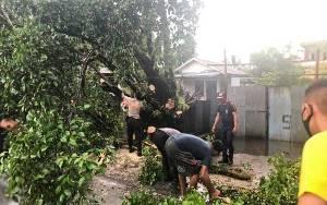 Hujan Deras di Palangka Raya Membuat Pohon Tumbang