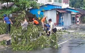 Hujan Deras Sebabkan Pohon Tumbang di Pulang Pisau