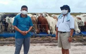 Dukung Food Estate, Sukamara Ranch akan Laksanakan Program Plasma Sapi