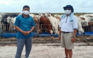 Selain Pola Plasma Sapi, Sukamara Ranch Juga Siapkan Tingkatkan Mutu Ternak Petani dengan Cara Ini...