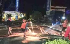 Pengendara Motor Dilarikan ke Rumah Sakit Setelah Tertimpa Pohon Tumbang