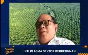 Lembaga Pengkajian: Perkebunan Swadaya Kelapa Sawit Masih yang Terbesar di Indonesia