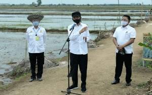 Presiden Joko Widodo: Tahun 2020 Target Lahan Food Estate 30.000 Hektare
