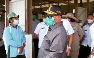 Plt Gubernur Kalteng Tinjau Peternakan Sapi Potong di Kabupaten Barito Utara