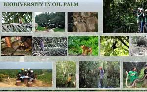 Konservasi Ekosistem Sawit Menjaga Pelestarian Keanekaragaman Hayati