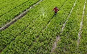 Kementan dan Produsen Terus Perangi Peredaran Pestisida Palsu