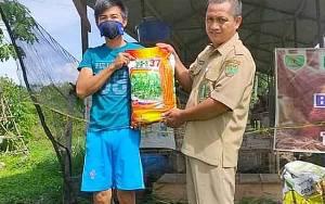 Dinas Pertanian Barito Timur Bagikan Benih Jagung kepada Kelompok Tani di Kecamatan Paju Epat