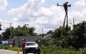 Ranting Pohon Rawan Picu Gangguan Pasokan Listrik