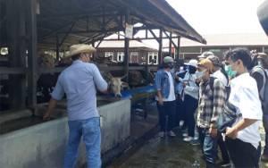 Puluhan Mahasiswa Antusias Melihat Peternakan Sapi di Sulung Ranch