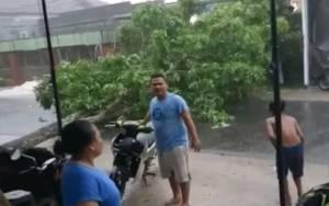Hujan Deras, Angin Kencang, Pohon Tumbang Hantam Pengguna Jalan