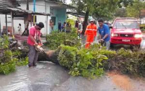 Hujan Disertai Angin Kencang, Pohon Depan SPBU Jalan Diponegoro Pangkalan Bun Tumbang