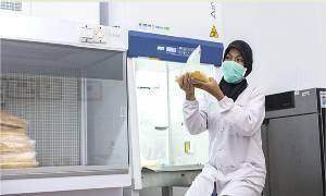 GAPKI Pastikan Tidak Ada Eksploitasi Pekerja Perempuan di Industri Sawit