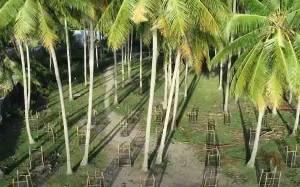 KKP Tanami Ribuan Vegetasi di Kota Palu Antisipasi Tsunami