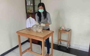 Kucing Peliharaan Warga di Kapuas Banyak Terserang Penyakit ini