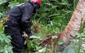 Diserang Lebah, 2 Warga Dilarikan ke RSUD dr Murjani Sampit